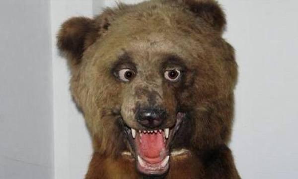 drunk-bear-bad-taxidermy.jpg.3dc940e13e123606ee1f2df6e40758d9.jpg
